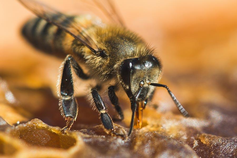Selbständige für Artenvielfalt, aber ohne einseitige Schuldzuweisung
